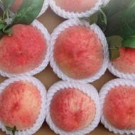 现摘新鲜桃子5斤装