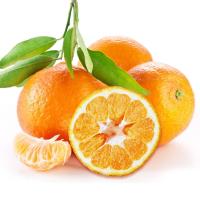 券妈妈会员: 橘子大人