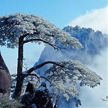 错峰出行:上海-黄山3日2晚半自助游