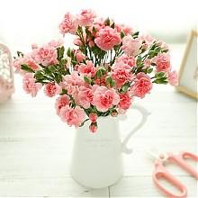 那时花开康乃馨鲜花礼盒18枝左右